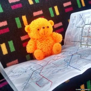 Teddy reading a map