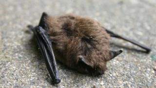 A stock image of a dead bat