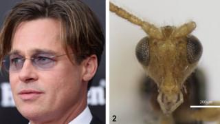 Brad Pitt and Conobregma bradpitti