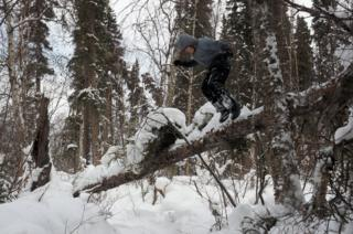 Sky salta de un tronco