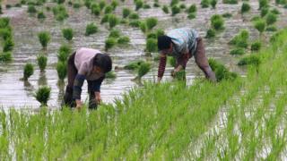 Китайские фермеры