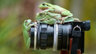 лягушки на фотоаппарате