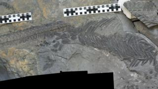 The reptile breaks the rules on what ichthyosaurs are like