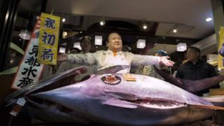 Japonya Ton Balığı