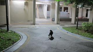 Cat on Yishun housing estate