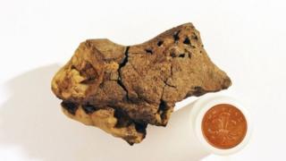Dünyanın ilk dinozor beyni fosili
