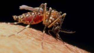 Cutar Malaria ta fi kashe kananan yara a kasashe maso tasowa