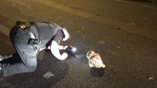 Police with owl