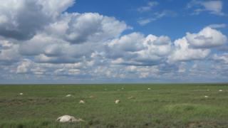 Saigas died in large numbers in the Betpak-Dala region of Kazakhstan