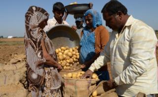 બનાસકાંઠાનો ડીસા તાલુકો બટાકા ઉત્પાદનનું મુખ્ય કેન્દ્ર છે પરંતુ આ વર્ષે બટાકાના ભાવમાં મંદીને કારણે ખેડૂતો નિરાશ છે