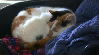A cat from Ty-Nant sanctuary