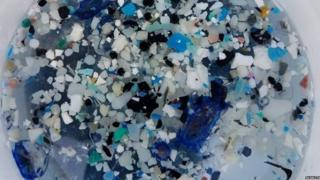 Plastic from an ocean sample (c) Algalita