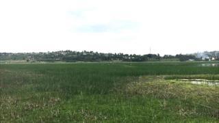 lake haramaya