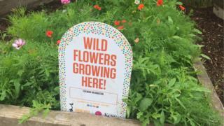 Wildflowers growing sign