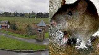 Picture of Palacerigg Country Park road sign alongside a photograph of a brown rat.