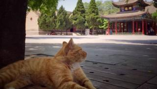 One of the cats with a temple building in the background