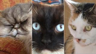 Bertie, Ukiyo and Missy