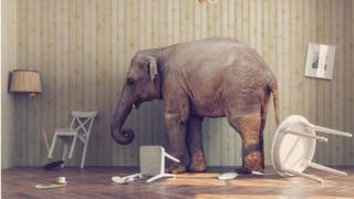Elephant in messy living room
