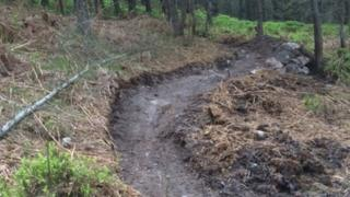 An unauthorised mountain bike trail