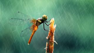 Wildlife photograph of a dragonfly by Muhammad Roem