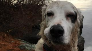 'Hero' Pete the English Setter dog died after facing a bear in Monksville Reservoir in New Jersey