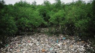 Ліс сміття