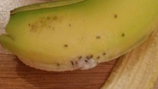 Brazilian Wandering Spiders on a banana