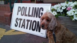 Pic of dog at polling station