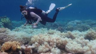 Великий Бар'єрний риф простягнувся вздовж північно-східного узбережжя Австралії на 2500 км