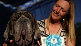 """Победитель конкурса """"Самая некрасивая собака в мире"""""""