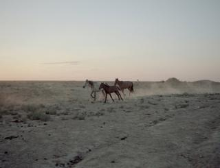 Horses run along the desert