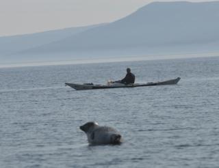 Kayaker and a seal