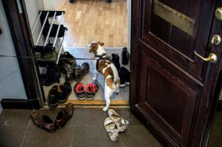 A Jack Russell enters the doorway of a house.