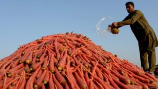 Afghanistan farmer with pile of carrots