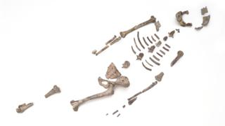 Lucy fossil bones