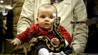 साप आणि बाळ
