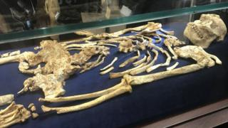 Little Foot skeleton unveiled in South Africa