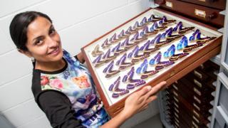 Huertas muestra un catálogo de mariposas. (Foto: Museo de Historia Natural de Londres).