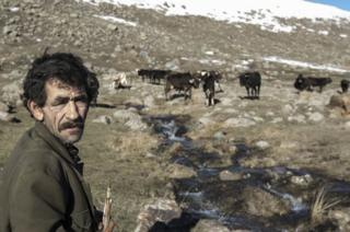 A man herds cattle in the mountains outside of Gyumri