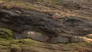 Lothian oil shale seam at South Queensferry