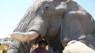 Fitting a tracker on a large elephan