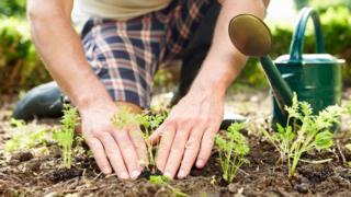 Gardener tends plants
