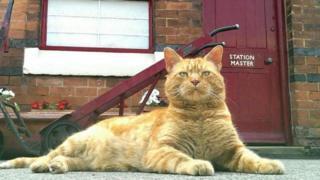 Alfie, the station cat
