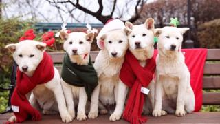 South Korea's former president Park Geun-hye's pet dogs are seen in this handout picture provided by the Presidential Blue House and released by News1 on 24 December 2015.