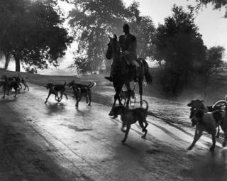 A an early morning fox hunt in Delhi