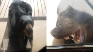 Images of the black bear outside the family home