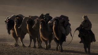 кочевник и верблюды