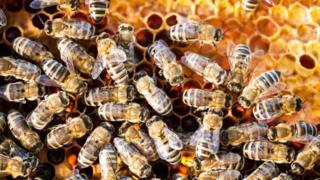 Honey bee production limited uk