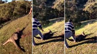 На видео видно, как мужчина нападает на животное с ножом