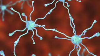 beyin hücreleleri